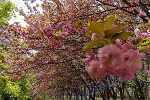 Unique Transmission invites you to enjoy flowers